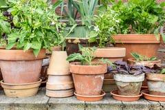 Gemüseanlagen Stockfoto