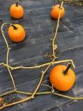 Gemüseflecken mit reifen orange Kürbisen Stockfotografie