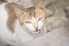 Gemusterte Katze lizenzfreies stockbild