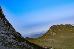 Gemzen bij de alpen stock foto's