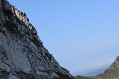 Gemzen bij de alpen royalty-vrije stock foto's