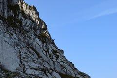Gemzen bij de alpen Stock Fotografie