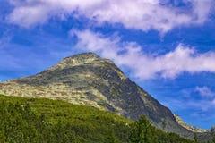 Gemzen, Kamzik in de bergen van Slowakije royalty-vrije stock fotografie