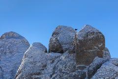 Gemzen Rupicapra Carpatica op berg royalty-vrije stock fotografie