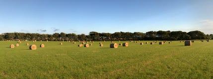 Genähtes Panorama der Heu-Ballen auf grünem Feld Stockfoto