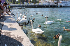 GENÈVE - SEPTEMBER 07 Turister på pir till den iconic springbrunnen som är en av de störst i världen 132 gal. av vatten Royaltyfri Bild