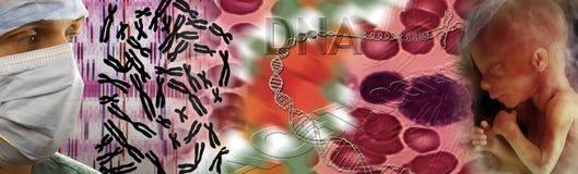 Genética - DNA - feto Fotos de archivo libres de regalías