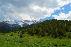 Genévrier dans les montagnes Photographie stock