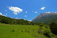 Genévrier dans les montagnes Photos libres de droits
