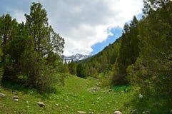 Genévrier dans les montagnes Photo libre de droits