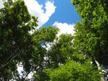 Gen Himmel Bäume Lizenzfreie Stockfotografie