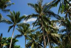 Gen Himmel Palmen Stockbilder
