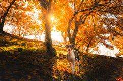 Genal dolina w jesieni, MÃ ¡ laga Zdjęcia Stock