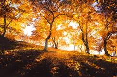 Genal-Tal im Herbst, MÃ-¡ laga Lizenzfreies Stockbild