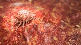 Genaue Illustration einer Krebszelle - Wiedergabe 3D lizenzfreie abbildung