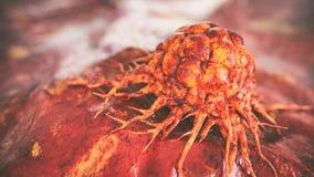 Genaue Illustration einer Krebszelle - Wiedergabe 3D vektor abbildung