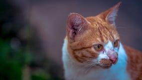 Genauer Blick der Katze Stockbilder