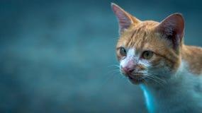 Genauer Blick der Katze Stockfoto
