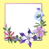 Gencjana i ogródu kwiaty Obrazy Stock