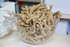 Gencjana korzeń, Gentianae radix Obraz Stock