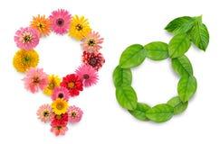 Gender simbols from plants Stock Photography