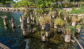 Gene Coulon Park Pilings. Plants grow out of old pilings at Gene Coulon Park in Renton, Washington stock image