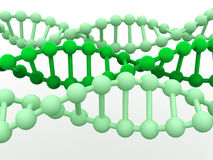 Gene in DNA. Royalty Free Stock Images