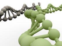 Gene in DNA. Stock Photos