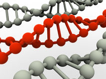 Gene in DNA. Stock Images