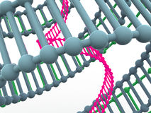 Gene in DNA. Stock Photography