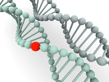 Gene in DNA Royalty Free Stock Photos