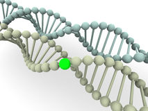 Gene in DNA Royalty Free Stock Photography