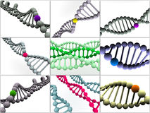 Gene in DNA Stock Image