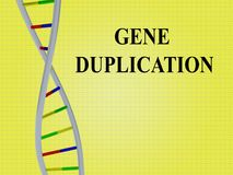 Gene Duplication concept. 3D illustration of GENE DUPLICATION script with DNA double helix ,  on yellow background Stock Images