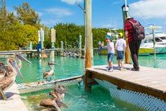 Gene e dois meninos da criança que alimentam peixes e pelicanos Imagens de Stock Royalty Free