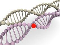 Gene en la DNA Fotos de archivo