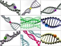 Gene en la DNA Imagen de archivo