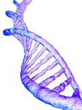 Gene model Stock Image
