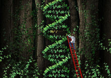 Gene Therapy. DNA helix concept with a medical genetics specialist doctor on a ladder climbing a plant that represents part of the human chromosomes anatomy as Royalty Free Stock Photo