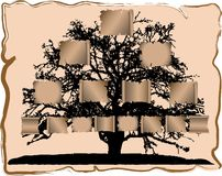 Genealogical tree. Vector illustration of genealogical tree Royalty Free Stock Images