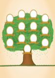 Genealogical tree. Green tree Royalty Free Stock Image