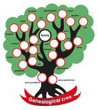 Genealogical tree Stock Image