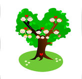 Family tree genealogy. In three generations Stock Images