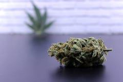 Geneeskrachtig van de marihuanaknoppen en cannabis blad stock afbeeldingen