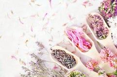 Geneeskrachtige bloemen en kruidenachtergrond: lavander, klaver, duizendblad stock foto's