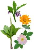 Geneeskrachtige installaties en bloemen Royalty-vrije Stock Afbeeldingen