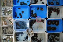 Geneeskrachtige Schildpadden Royalty-vrije Stock Fotografie