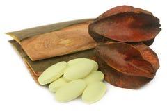 Geneeskrachtige Terminalia-arjuna met pillen stock foto