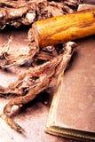 Geneeskrachtige wortel Hedysarum Stock Fotografie