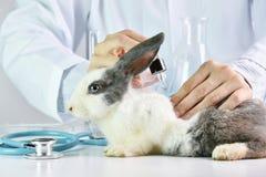 Geneeskundeonderzoek, Wetenschapper het testen drug naar konijndier stock afbeelding